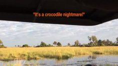 Dos leones cruzan el río con cautela, cuando un cocodrilo les 'da la bienvenida'. ¡Estuvo intenso!