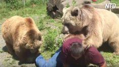 Se acurruca juguetonamente con osos de 400 libras, de repente uno sube a su espalda, ¡es una locura!