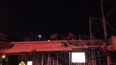 Caen desde 6 metros de altura dos pasajeros de una montaña rusa en Daytona Beach
