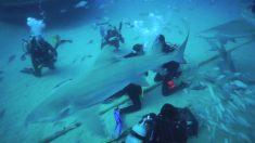 Esta pareja de buzos se compromete rodeada de tiburones. La escena es inigualable