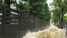 Brota el agua del pavimento tras terremoto de 5,9 grados en Japón