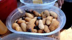 Larvas, hormigas y papas, secretos culinarios de los indígenas de Bolivia