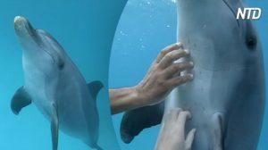 Ven a una manada de delfines jugando cerca de su red y uno de ellos la hizo una experiencia única