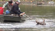 Padre e hijo ven a un ciervo luchando en un río. Pero una mirada más de cerca, el tiempo se acaba
