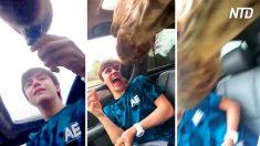 Visitan a las jirafas en el zoológico. Cuando deciden alimentarlas, se les escapa de las manos