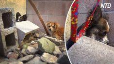 Arrinconan a los perros abandonados entre las casas. Mira que pasa cuando se sacan las correas