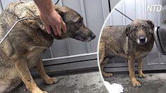 Este perro callejero llora cuando se le acercan mucho. Mira cuando se da cuenta de que está a salvo