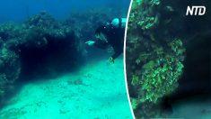 Estos buzos exploran una oscura cueva submarina. Cuando entran ven a un peligroso depredador