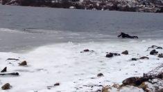 Este buzo ve a un perro atrapado en el lago congelado y decide ayudar. ¡Fue muy arriesgado!