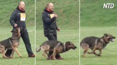 Ni siquiera pestañees cuando estos perros empiezan a hacer sus trucos, solo están calentando