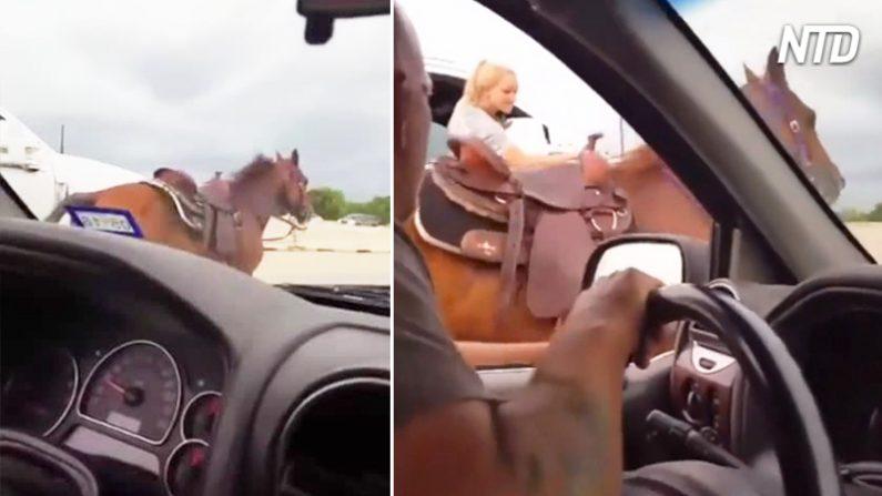 Este caballo corre asustado por la autopista, hasta que una valerosa mujer toma las riendas