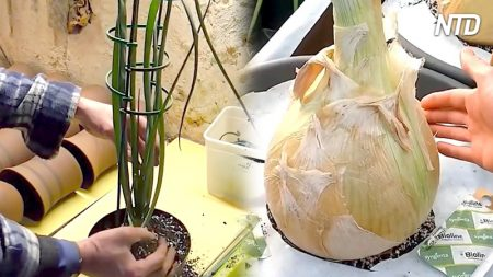 Planta algunas semillas y cuida los brotes con amor. Cuando llega el momento de la cosecha… ¡Wow!