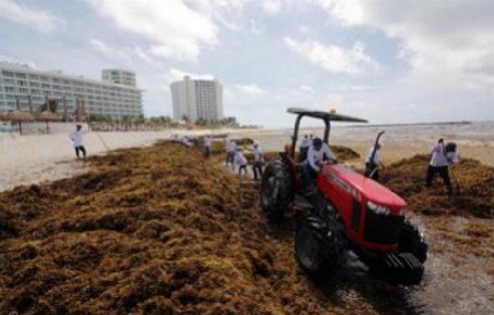 Autoridades retiran sargazo de las playas del caribe mexicano Voluntarios de la Secretaría de Medio Ambiente retiran las algas sargazo hoy, viernes 22 de junio de 2018, en playas de Cancún, en el estado de Quintana Roo (México). EFE
