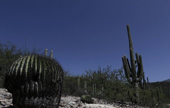 La Unesco incluye 19 nuevos sitios en la lista de Patrimonio Mundial Vista general de la reserva de la biósfera Tehuacán-Cuicatlán, en Zapotitlán Salinas, en Puebla (México). EFE/ArchivoPuebla (México). La reserva de la biósfera Tehuacán-Cuicatlán, fue propuesta para que quede integrada en la lista de Patrimonio Mixto de la Humanidad de la Organización de las Naciones Unidas para la Educación, la Ciencia y la Cultura (Unesco, por sus siglas en inglés), en su pasada reunión. La reserva de la biósfera Tehuacán-Cuicatlán comprende un área de 490.000 héctareas, en 51 municipios (31 del estado de Oaxaca y 20 de Puebla), repartido en 400 comunidades. EFE/Hugo Ortuño