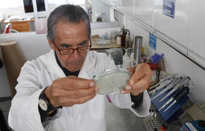 Un investigador mexicano creó un antibiótico a partir de piel de rana que cura la inflamación de las ubres de las vacas sin dejar rastros tóxicos en la leche. EFE/ Francisco Guasco