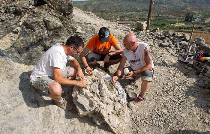Ultiman la excavación de un espinosaurio de 120 millones de años en La Rioja Un equipo de paleontólogos ha logrado extraer restos de un dinosaurio de la familia de los espinosaurios, en un yacimiento de Igea (La Rioja), en el que hoy concluye la excavación, para dar paso a un minucioso trabajo en laboratorio. EFE