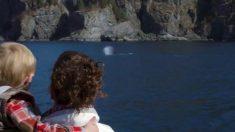 Graban el canto de las ballenas jorobadas justo antes de aparecer en la superficie