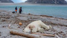 Matan a tiros a oso polar que atacó a guardia turístico en Crucero hacia el Polo Norte