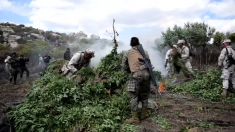Ejército mexicano incendia tres hectáreas de plantaciones de marihuana en Tijuana