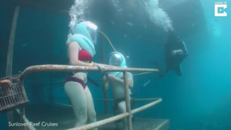 Aprovecha la visita a la Gran Barrera de Coral como una buena oportunidad para hacerle la pregunta