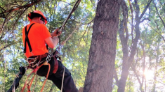 Rescata a un gatito atrapado en lo alto de un árbol luego que los fuegos artificiales lo asustaran