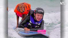 A este perro de servicio le gusta surfear y ayudar a los niños con autismo. Él sabe lo que sienten