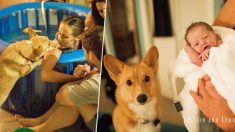Perro leal no se separa de su dueña mientras da a luz, manteniéndola en calma y haciéndola sentirse amada