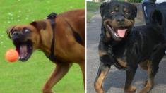8 divertidas fotos de perros que te sacarán una sonrisa