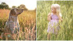 Esta niña de 3 años se perdió en un maizal pero su amigo peludo no la abandonó ni por un instante