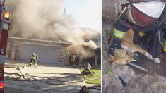 En un dramático esfuerzo, perrito enjaulado es rescatado de un incendio por los bomberos