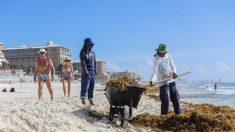 Mexicanos usan algas, cebolla y estiércol para crear energía limpia
