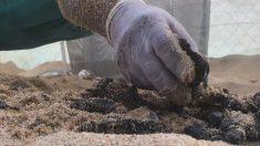 Denuncian daño ambiental para tortugas por extraer arena de playa mexicana