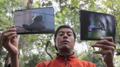 Ciudad de México presenta conmovedoras imágenes sobre la supervivencia de los pájaros