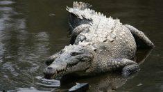 Dueño de un perro abre las mandíbulas de un caimán para salvar a su mascota