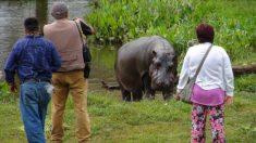 Hipopótamo mata a turista de una mordida en el pecho cuando intentaba fotografiarlo en Kenia