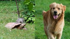 Perrito se convierte en el mejor amigo de una tortuga que era acosada por otras