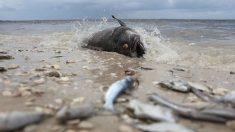 Dramáticas imágenes reflejan el estado de emergencia en Florida por la mortal marea roja
