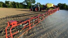 Desde EE.UU, denuncian que marcas conocidas de cereales contienen pesticida cancerígeno