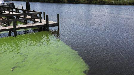 Playas de Florida contaminadas por algas