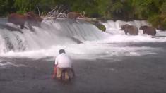 Imprudente arriesga su vida por una selfie con osos pardos