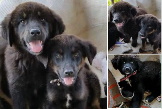 Siete adorables cachorros abandonados en una isla deshabitada en Canadá buscan dueños