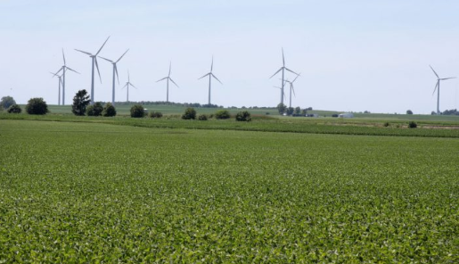La soja crece en un campo en Dwight, Illinois, el 13 de junio de 2018. Sus en Chicago han caído un 16 por ciento desde el comienzo de las disputas comerciales a principios de abril. (Scott Olson / Getty Images)