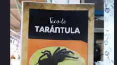 Mexicanos promovían tacos de tarántulas rojas en peligro de extinción, hasta que las incautaron