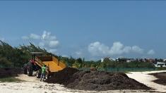Desastre por la masiva llegada de sargazo a Quintana Roo y Cancún activa medidas de emergencia
