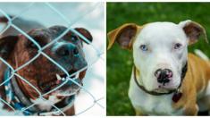 Quebec rechaza la propuesta de prohibir razas peligrosas de perros: