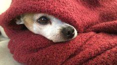 Este perro esperó 4 meses a su dueño muerto afuera del hospital. Al final, fue adoptado en un hogar