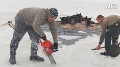 Estos lugareños compiten contra el reloj para salvar a unos alces atrapados en el lago helado
