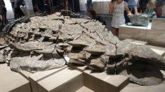 Descubren fósil de dinosaurio tan impecablemente conservado que deslumbra a los científicos