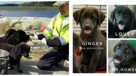 """Rescatan 7 cachorros de la """"isla de Gilligan"""" y su historia se está robando miles de corazones"""