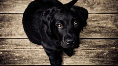 Escucha llantos en medio de la oscuridad y termina rescatando a 7 cachorros náufragos en una isla